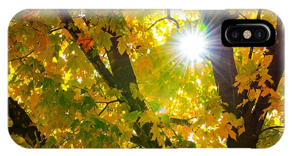 Autumn Morn IPhone Case