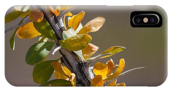 Autumn Ocotillo IPhone Case