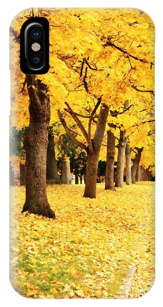 Autumn Perspective IPhone Case