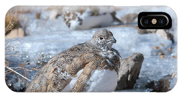 Autumn Plumage White-tailed Ptarmigan IPhone Case