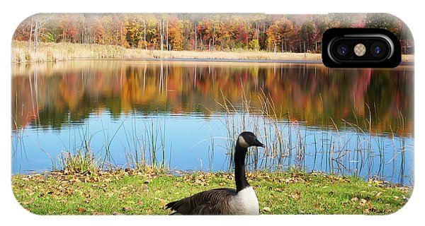 Autumn Pond Goose IPhone Case