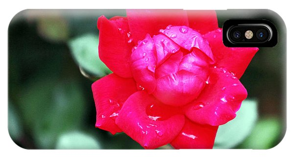 Autumn Rose After The Rain IPhone Case