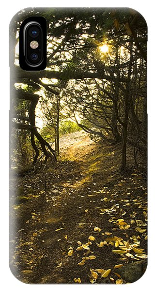 Autumn Trail In Woods IPhone Case