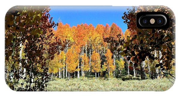 Autumn Trees Dixie National Forest Utah IPhone Case