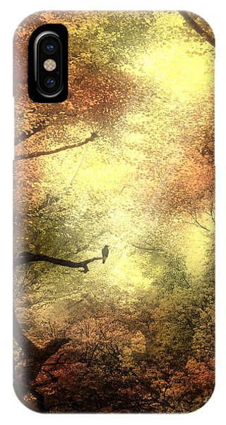 Autumn Trees With Light Shining Through IPhone Case