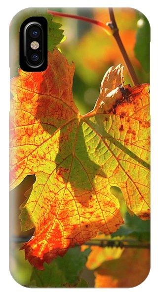 Autumn Vine Leaf, Vineyard Phone Case by David Wall