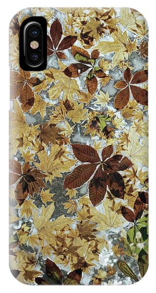 Leave iPhone Case - Autumnal Leaves by Chris Dawe/science Photo Library