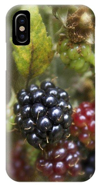 Autumn's Fruit Phone Case by Michelle Orai