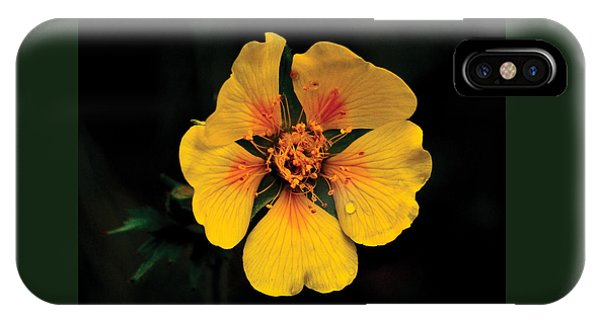 Avens Flower IPhone Case