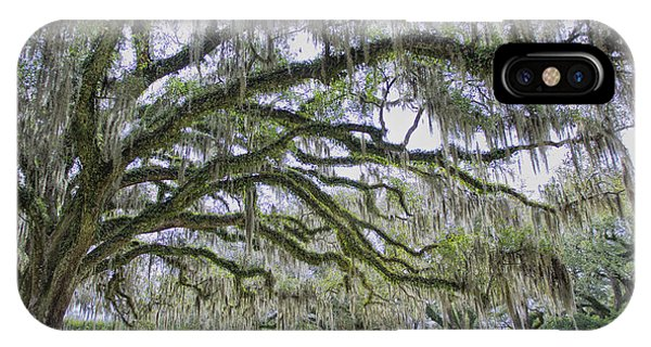 Avery Island Oak IPhone Case