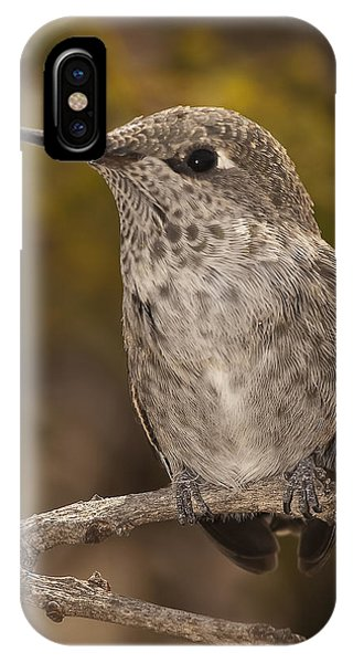 Baby Anna's Hummingbird IPhone Case