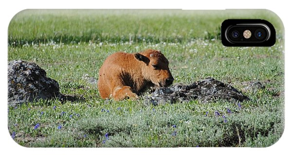 Baby Bison Napping IPhone Case
