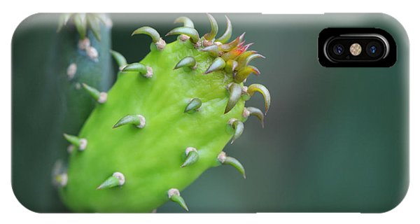 Baby Cactus - Macro Photography By Sharon Cummings IPhone Case