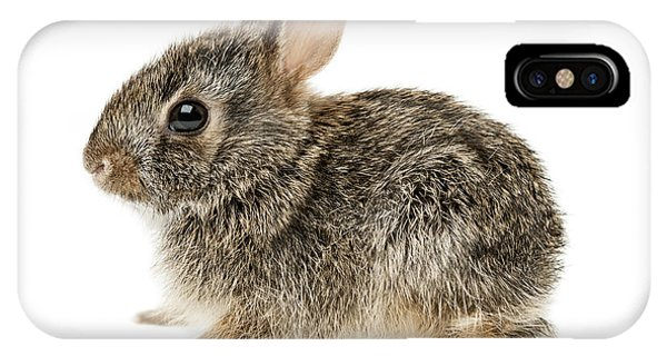 Baby Cottontail Bunny Rabbit IPhone Case