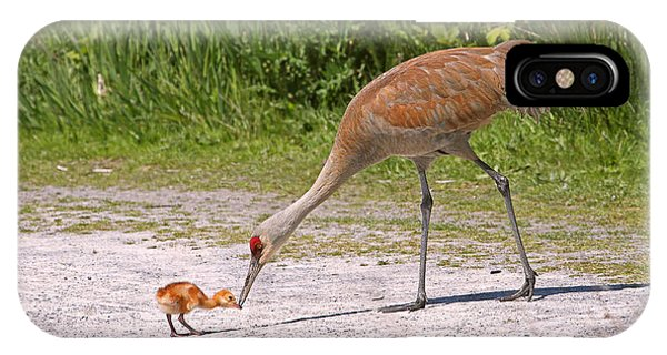 Baby Crane With Mother IPhone Case