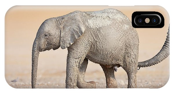 Cow iPhone Case - Baby Elephant  by Johan Swanepoel