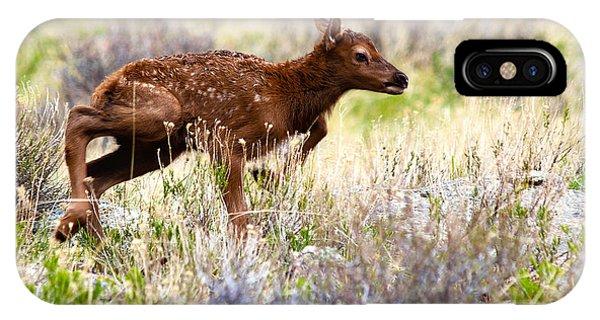 Baby Elk IPhone Case