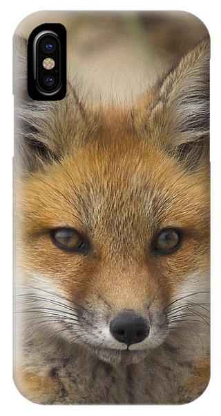 Baby Fox  IPhone Case