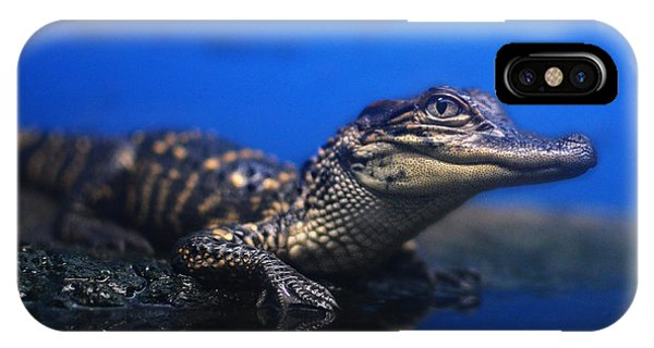 Baby Gator IPhone Case