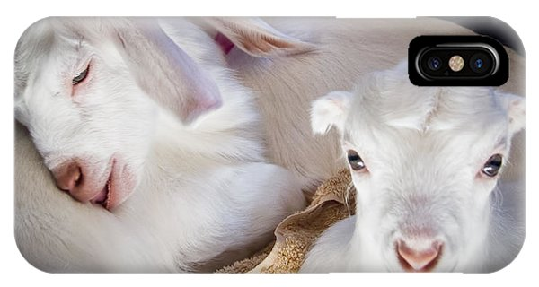Baby Goats Napping IPhone Case