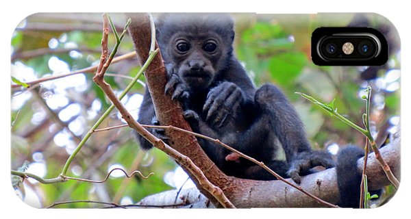 Baby Howler Monkey  Phone Case by Melanie Beckler
