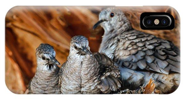 Baby Inca Doves IPhone Case