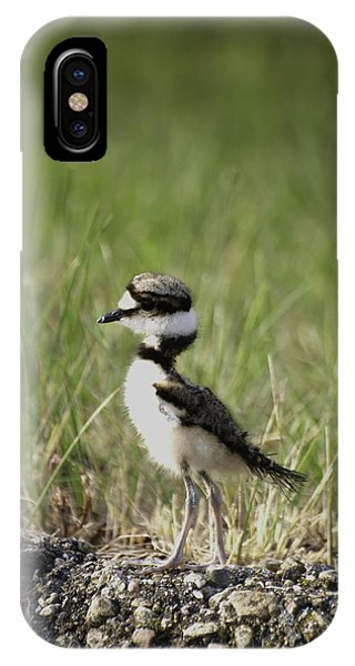 Killdeer iPhone Case - Baby Killdeer 2 by Thomas Young