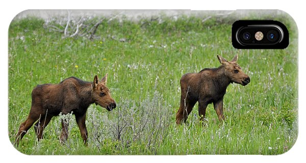 Baby Moose On The Banks Of The Gallatin IPhone Case