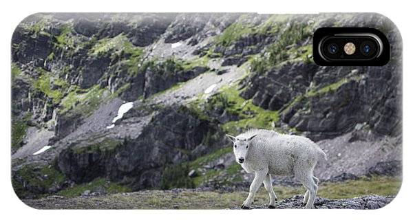 Baby Mountain Goat At Comeau Pass IPhone Case