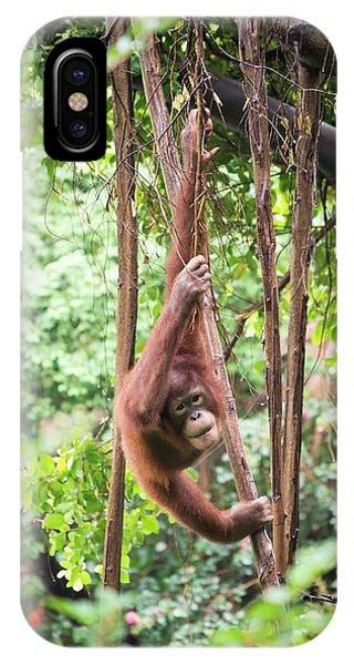 Baby Orangutan Phone Case by Pan Xunbin