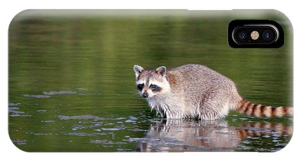 Baby Raccoon In Green Water IPhone Case