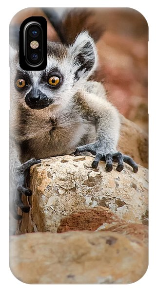 Baby Ringtail Lemur IPhone Case