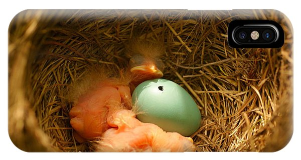 Baby Robins2 IPhone Case