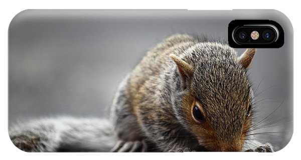 Baby Squirrel Gets A Snack IPhone Case
