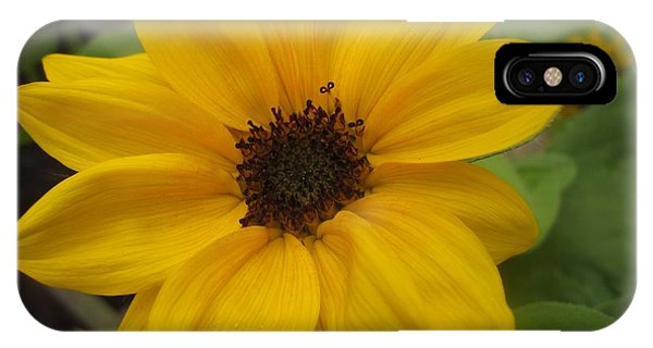Baby Sunflower IPhone Case