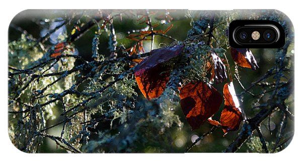 Back Lit Autumn Leaves IPhone Case