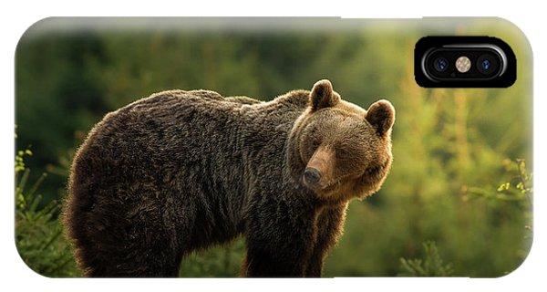 Brown Bear iPhone Case - Backlit Bear by Richard Krchnak