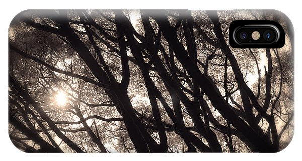 Backlit Branches Of A Majestic Tree I IPhone Case