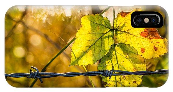 Backlit Leaf. IPhone Case