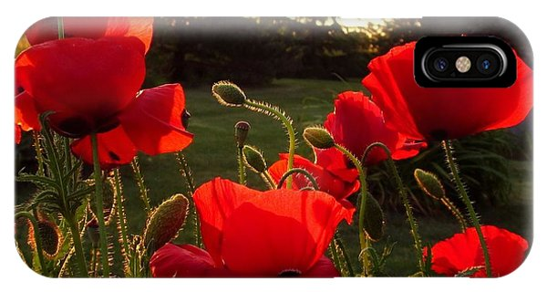 Backlit Red Poppies IPhone Case