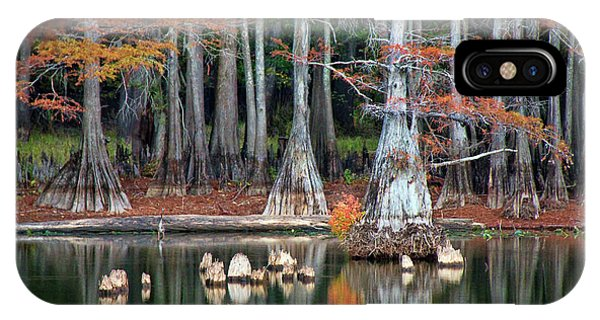 Bald Cypress iPhone Case - Backwaters by Lana Trussell