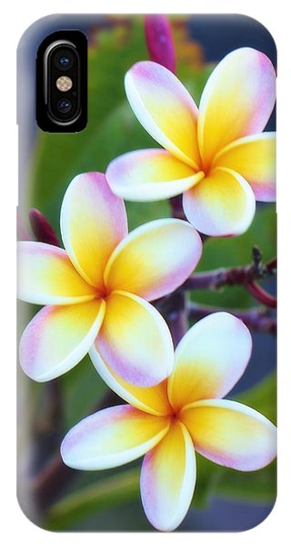 Backyard Plumeria IPhone Case