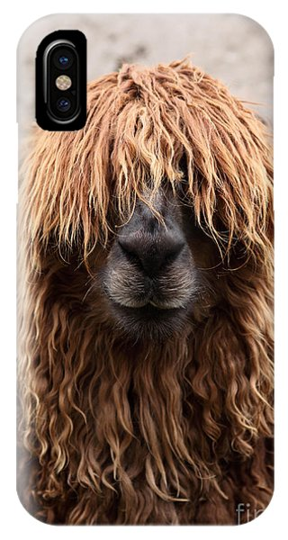 Llama iPhone Case - Bad Hair Day by James Brunker