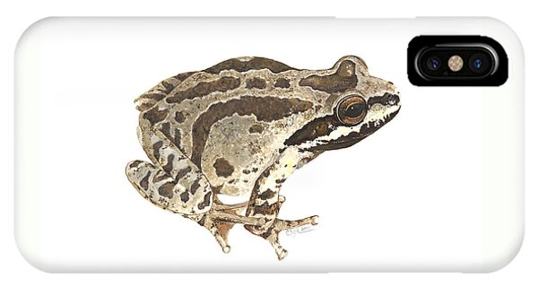 Baja California Treefrog IPhone Case