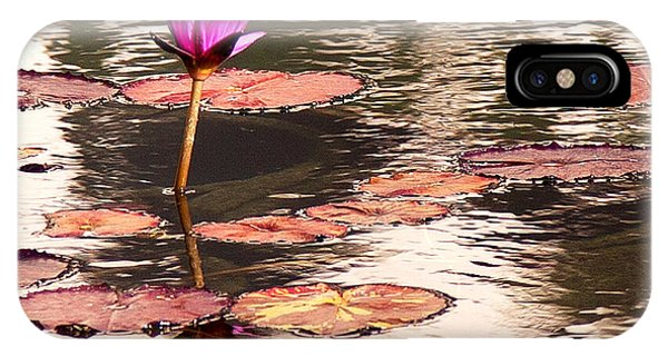 Balboa Park Water Lily IPhone Case
