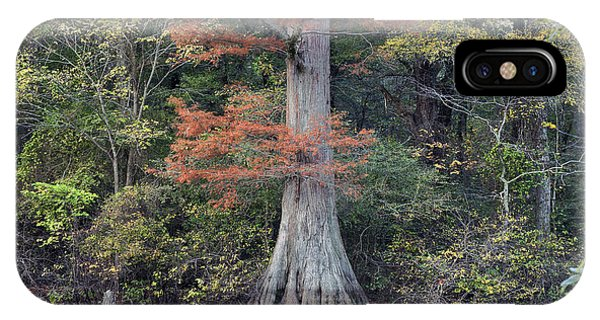 Bald Cypress iPhone Case - Bald Cypress In White River Nrw Arkansas by Tim Fitzharris
