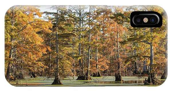 Bald Cypress iPhone Case - Bald Cypress Trees In Swamp, Horseshoe by Panoramic Images