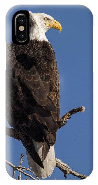 Bald Eagle 1 IPhone Case