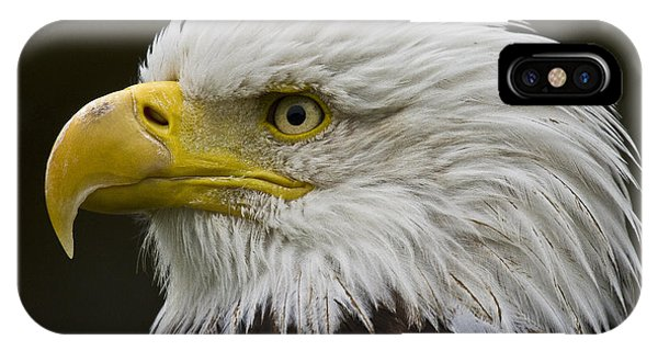 Bald Eagle - 7 IPhone Case