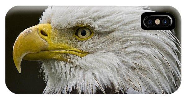Bald Eagle - 7 IPhone Case